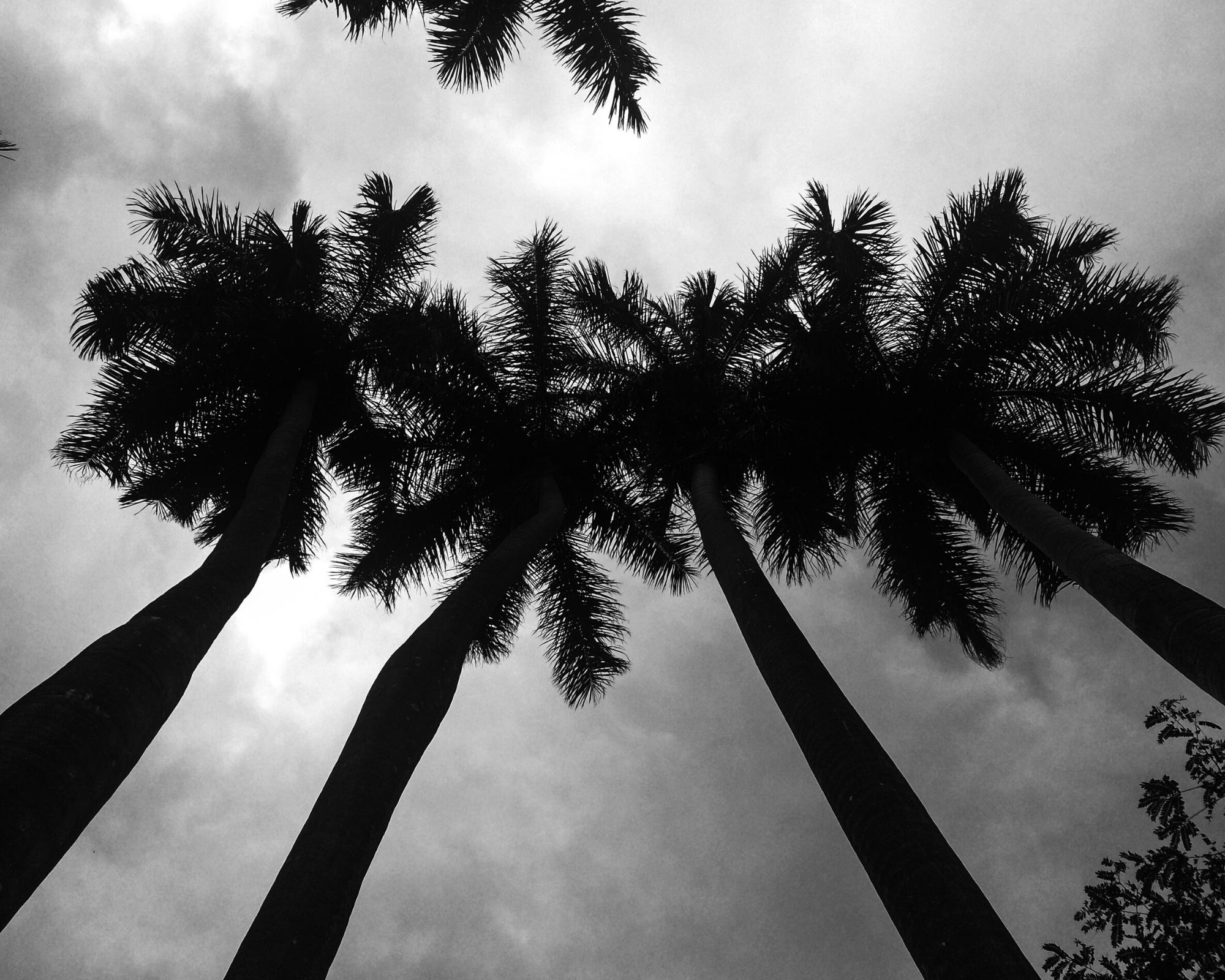 Sous les tropiques…
